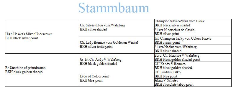 StammMerlin